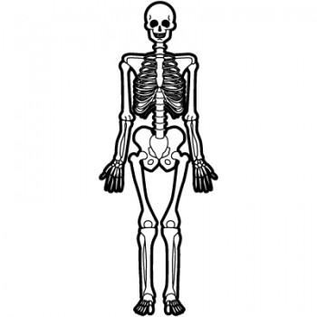 骨格を知るものは…【西荻窪・パーソナルトレーニング】